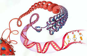 http://virginiahughes.com/2008/10/22/defining-epigenetic/