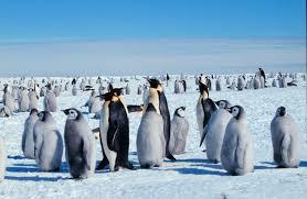 http://runet.lt/world_kalendar/863-kto-otkryl-antarktidu.html