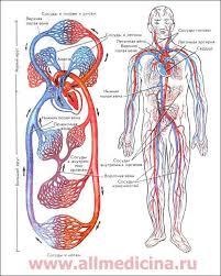 Значение основных показателей общего анализа крови