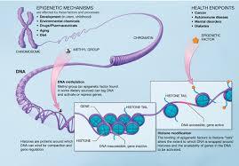 http://nihroadmap.nih.gov/epigenomics/epigeneticmechanisms.asp